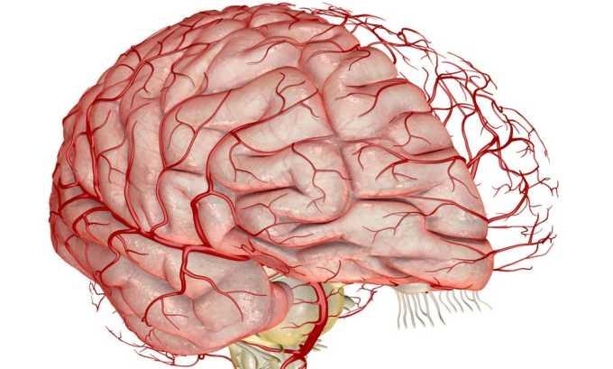 Фенотропил повышает интегративную активность головного мозга