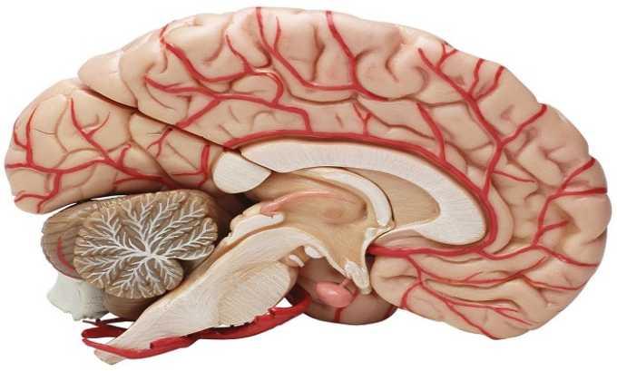 Препарат снижает сопротивление сосудов головного мозга