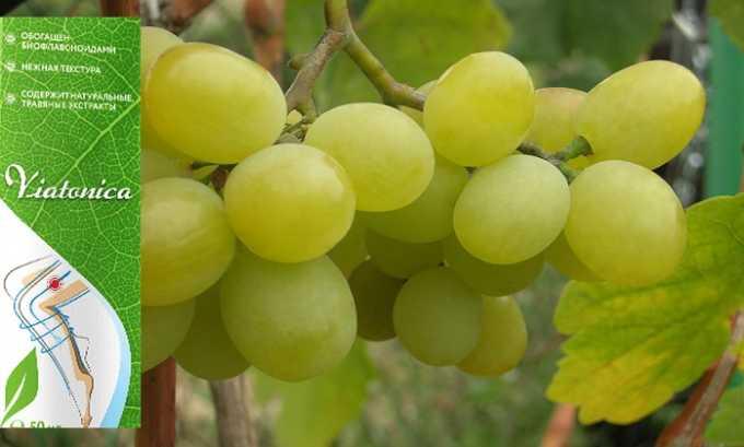 Виатоника включат в себя воск винограда