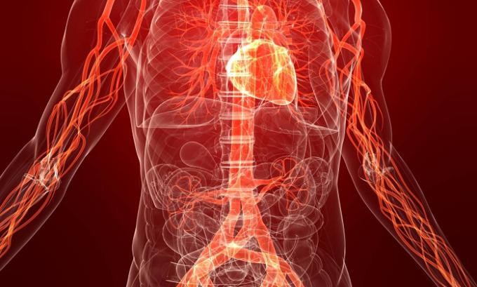 Гесперидин диосмин восстанавливает кровообращение