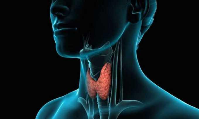 При болезнях щитовидной железы с повышенной чувствительностью к компонентам йода нельзя принимать препарат без назначения врача