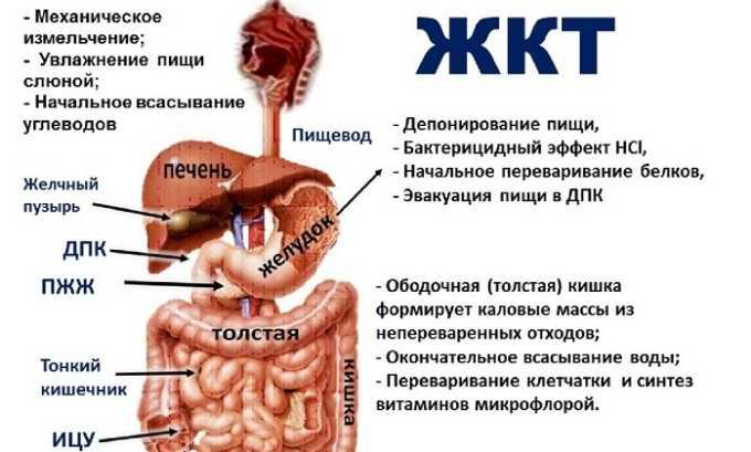 Лекарственное средство оперативно расщепляется в ЖКТ после употребления