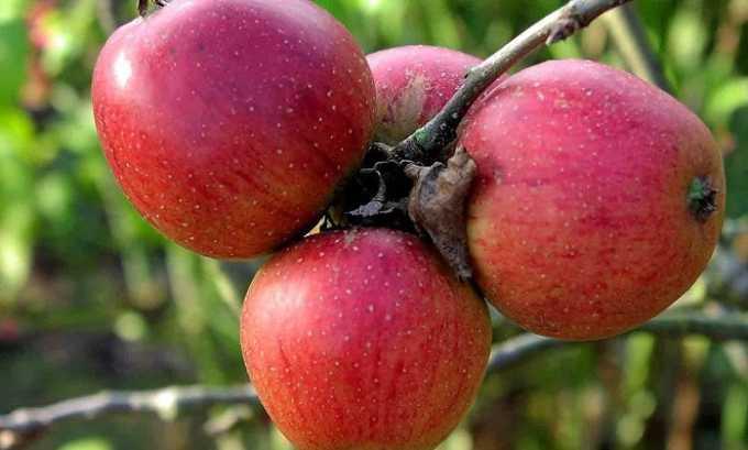В составе уксуса, который делают из яблок, много полезных веществ. В нем содержатся витамины А, С, Е, группы В, микро- и макроэлементы, уксусная, молочная, щавелевая, яблочная и лимонная кислоты, антиоксиданты, ферменты и пектин
