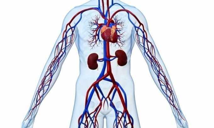 Вазокет улучшает микроциркуляцию крови в сосудах