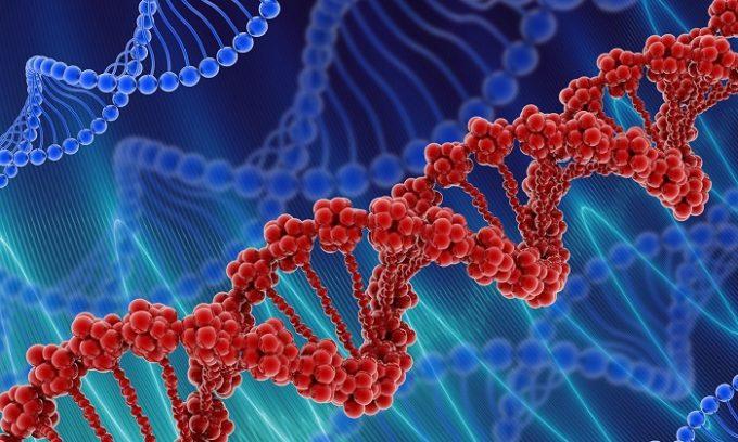 Причиной появления сосудистых звёздочек может стать генетическая предрасположенность