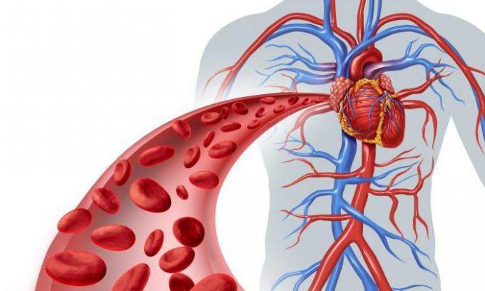 Гирудин — вещество в слюнных железах пиявки — благотворно влияет на состояние кровеносной системы человека