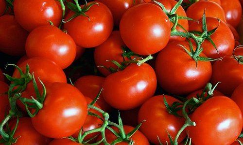 Для укрепления стенок сосудов при варикозе используют компрессы из томатов