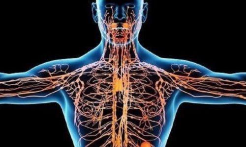 Под воздействием Венолайфа нормализуется процесс дренажа лимфы