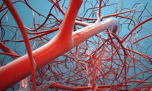 Натуральное активное вещество препарата делает стенки кровеносных сосудов более эластичными и крепкими