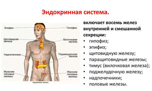 Гепарин активно участвует в работе эндокринной системы