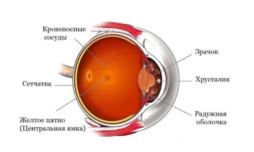 Ксантинола Никотинат улучшает микроциркуляцию крови в глазной сетчатке