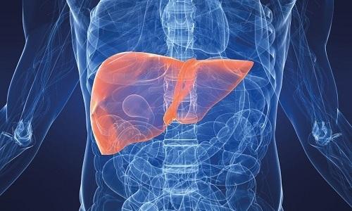 Во время восстановления здоровья после передозировки Липопраймом следует контролировать работу печени