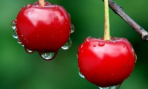 Витамин Р содержится в вишне - 1500 мкг