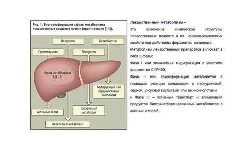 Действующее вещество метаболизируется в печени